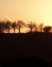 Tramonto con alberi in controluce